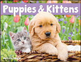 Puppies & Kittens Promotional Calendar 2019 Window